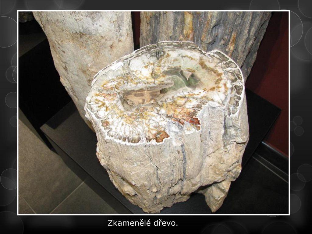 uhlíkované zkamenělé dřevo seznamky webů regina