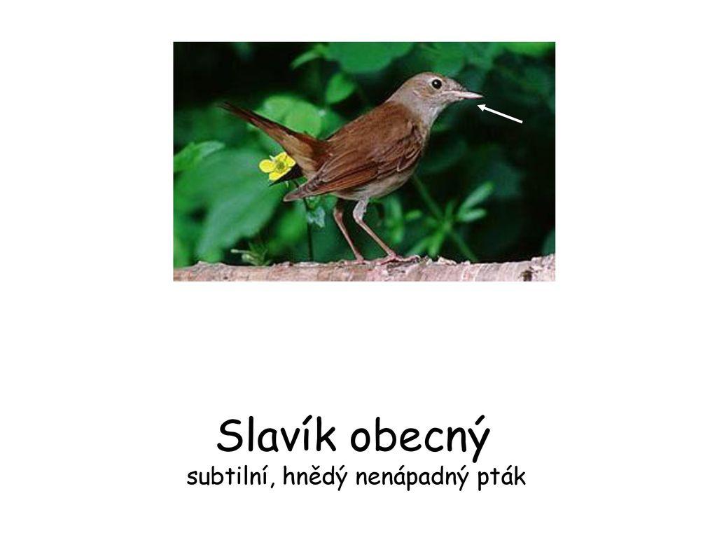 obrázky hnědých ptáků