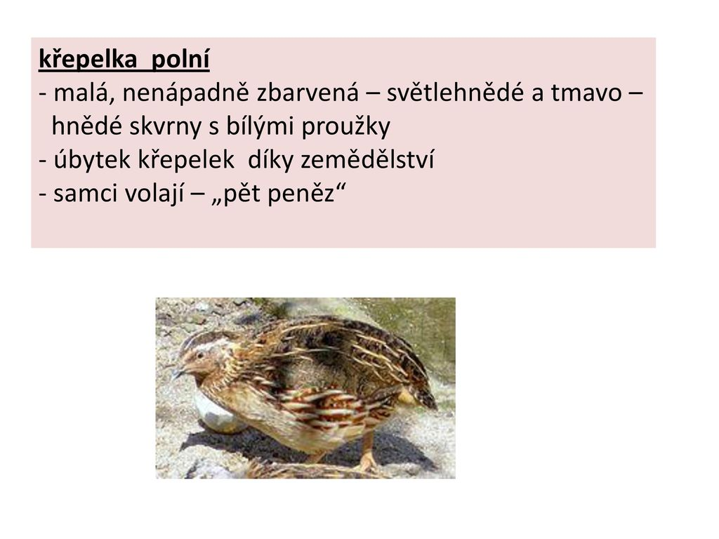 Autor Lenka Hrncirova Ppt Stahnout