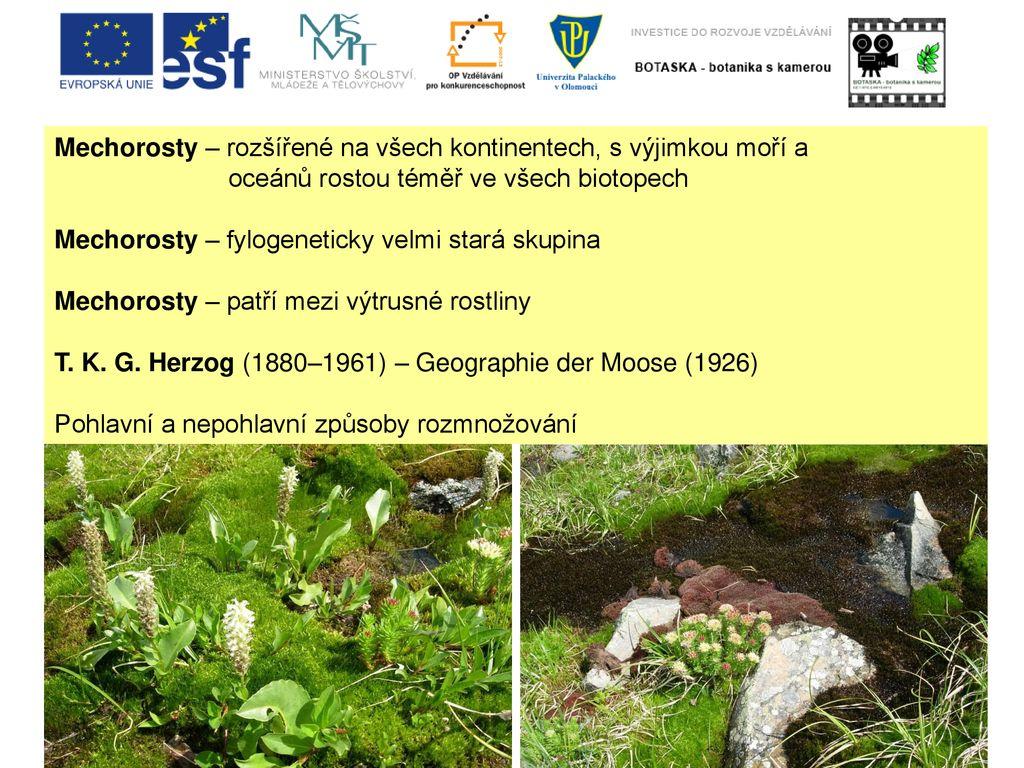 BOTASKA – botanika s kamerou CZ.1.07 2.2.00 . 2 Mechorosty – rozšířené ... 1d64f4248f