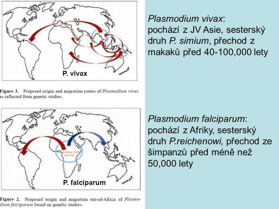 Plasmodium falciparum: