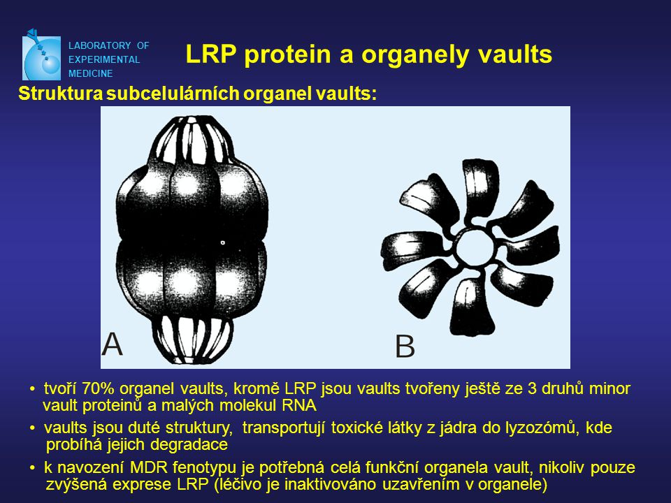 LRP protein a organely vaults