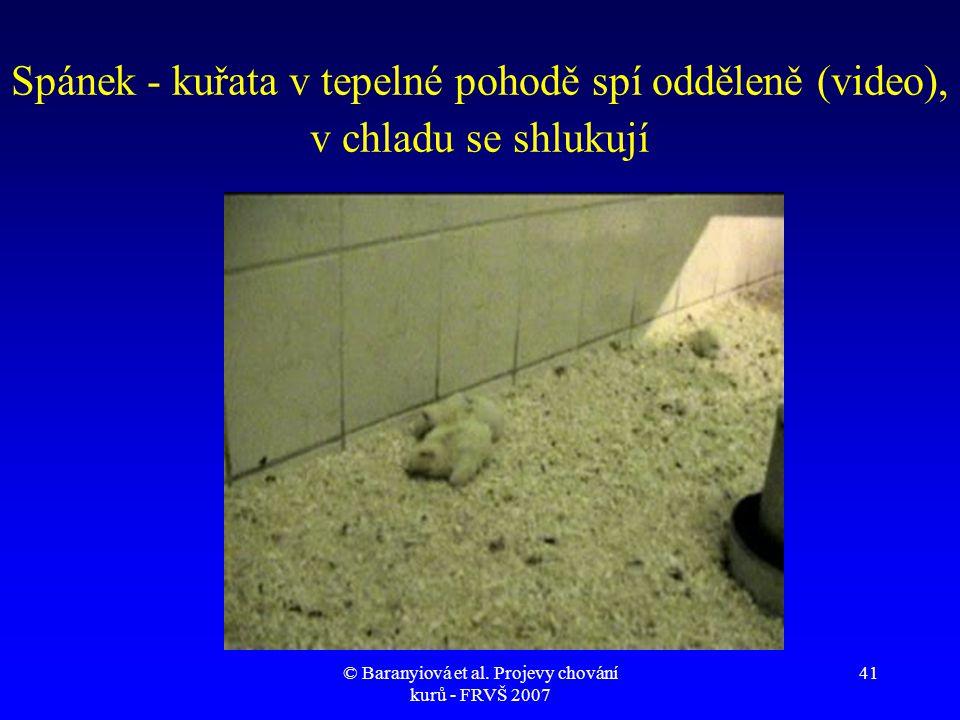 kuřata s velkými ptáky videa
