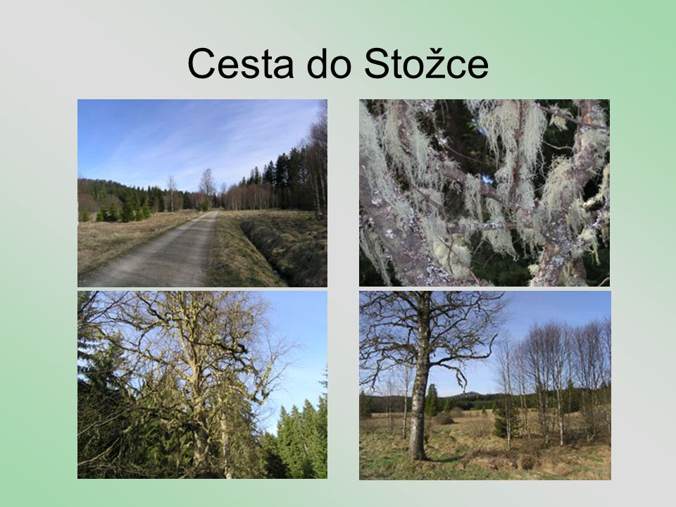 Cesta do Stožce