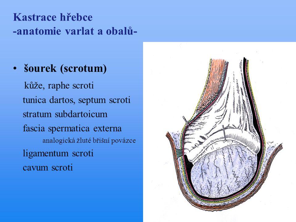 Urogenitální chirurgie koní - ppt stáhnout