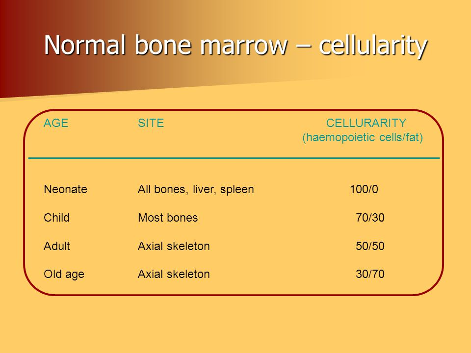 Normal bone marrow – cellularity