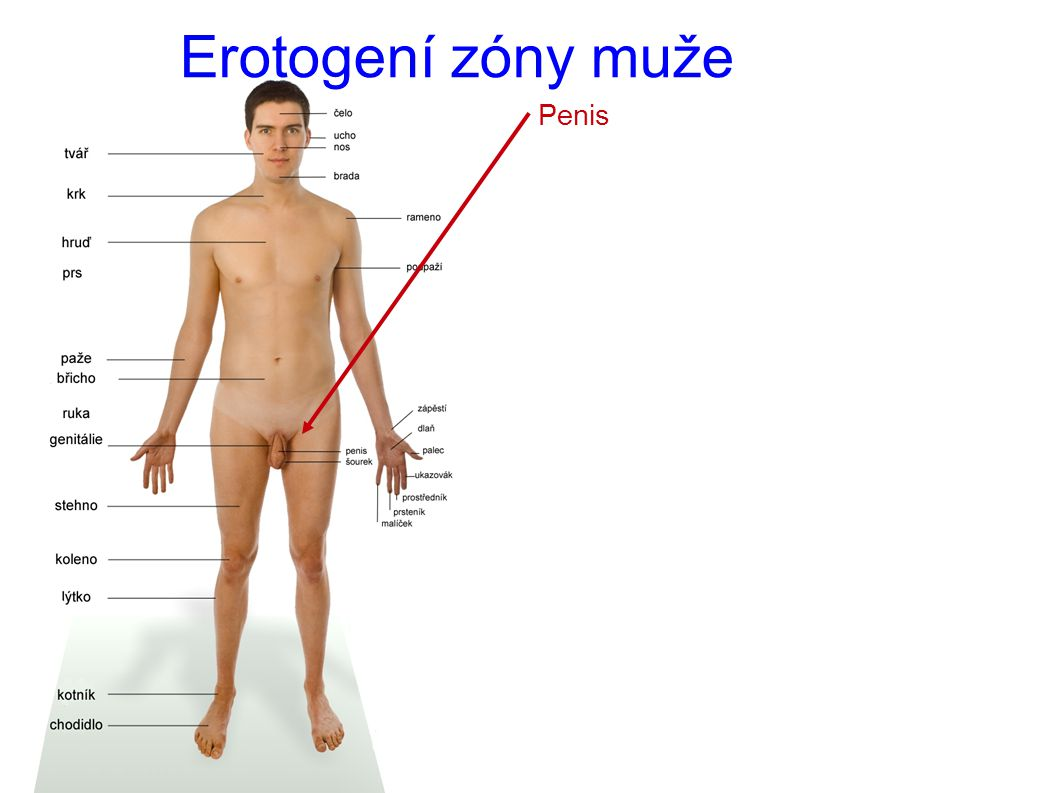 muži penis obrázek