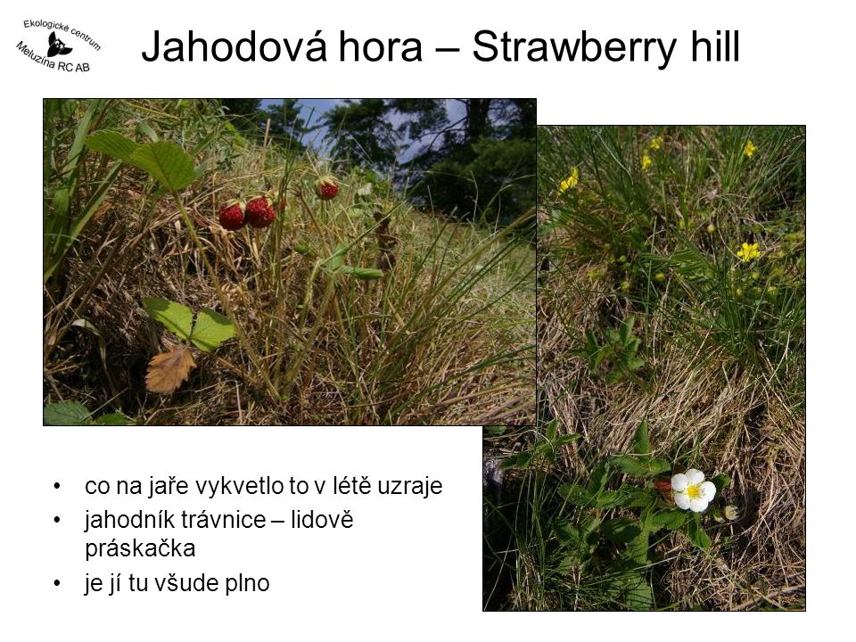 Jahodová hora – Strawberry hill