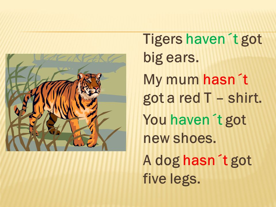 Tigers haven´t got big ears. My mum hasn´t got a red T – shirt