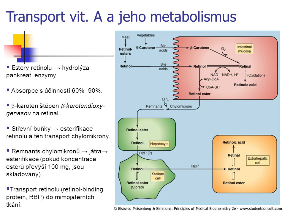 Transport vit. A a jeho metabolismus