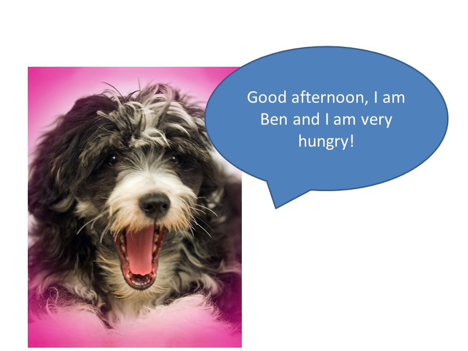 Good afternoon, I am Ben and I am very hungry!
