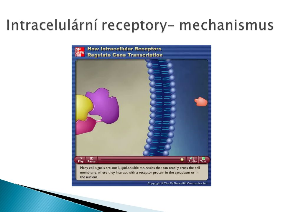 Intracelulární receptory- mechanismus