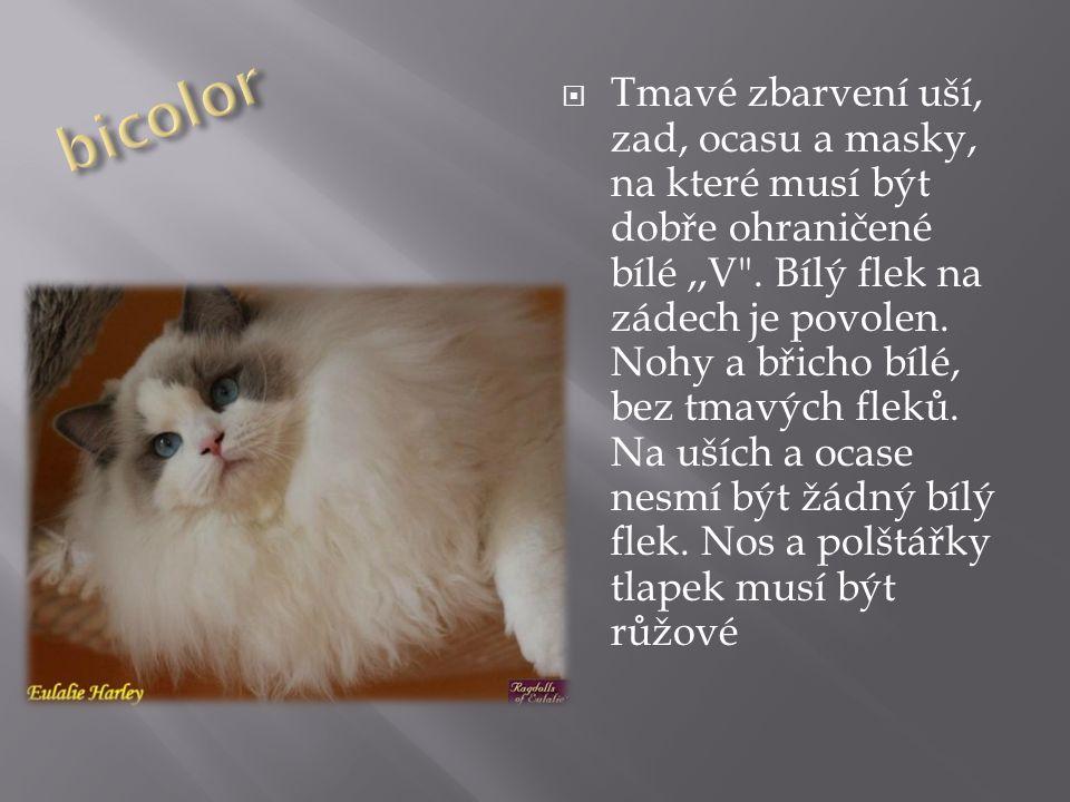 Kristyna Maskova Ragdoll Ppt Stahnout
