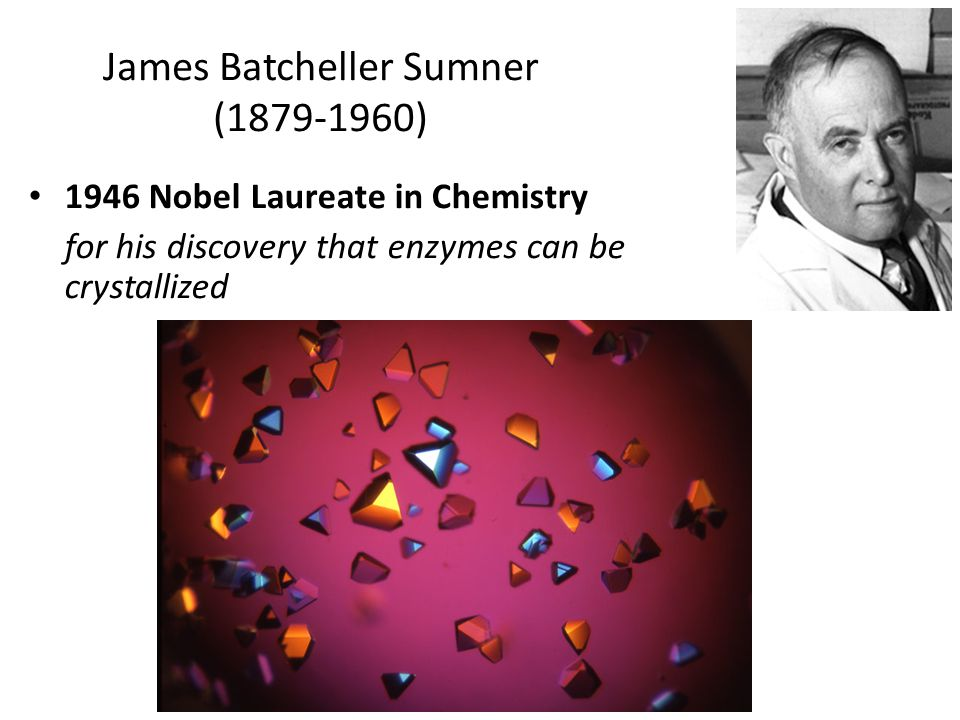 James Batcheller Sumner (1879-1960)
