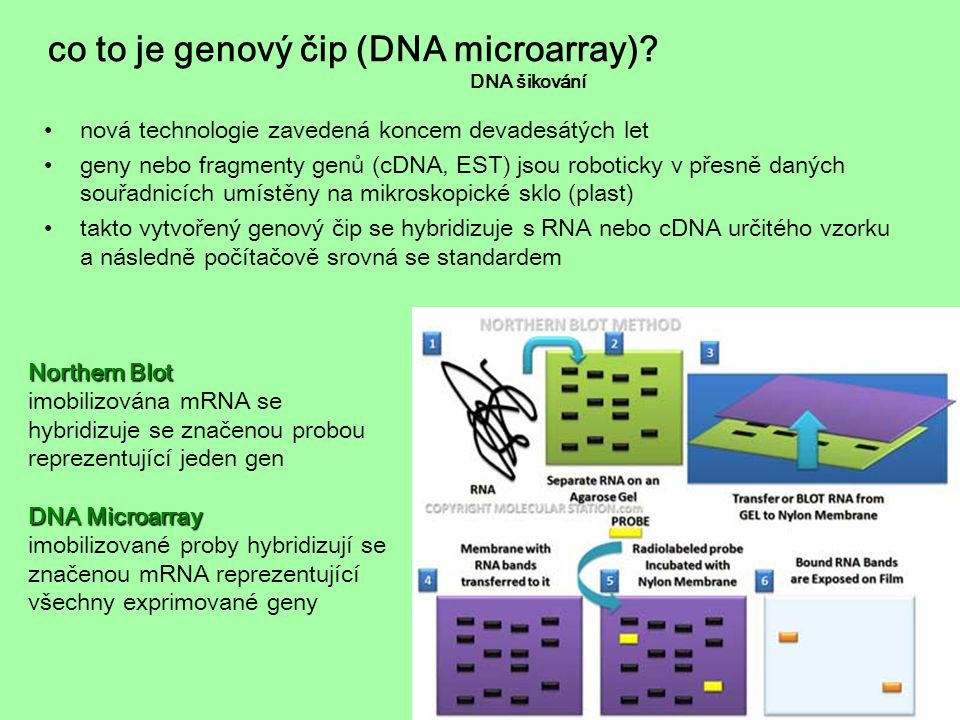 co to je genový čip (DNA microarray) DNA šikování
