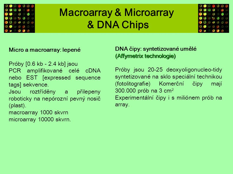 Macroarray & Microarray & DNA Chips
