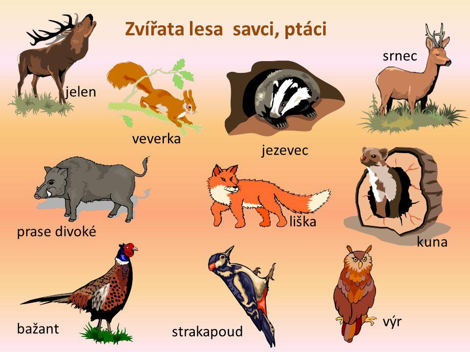 Zivot V Lese Na Podzim Mgr Iveta Honzejkova Ppt Stahnout