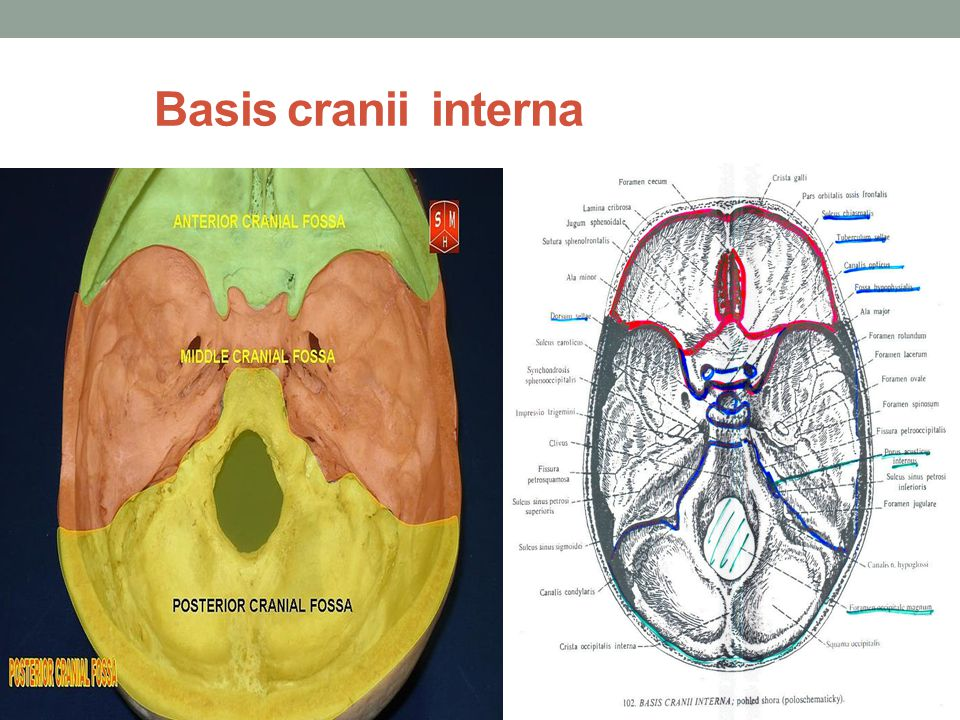 Basis cranii interna