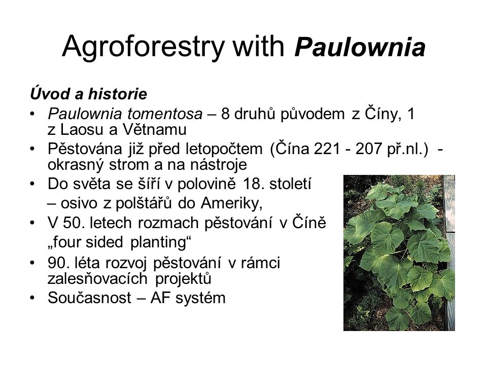Agroforestry with Paulownia