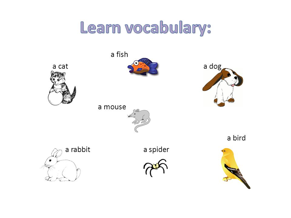 Learn vocabulary: a fish a cat a dog a mouse a bird a rabbit a spider