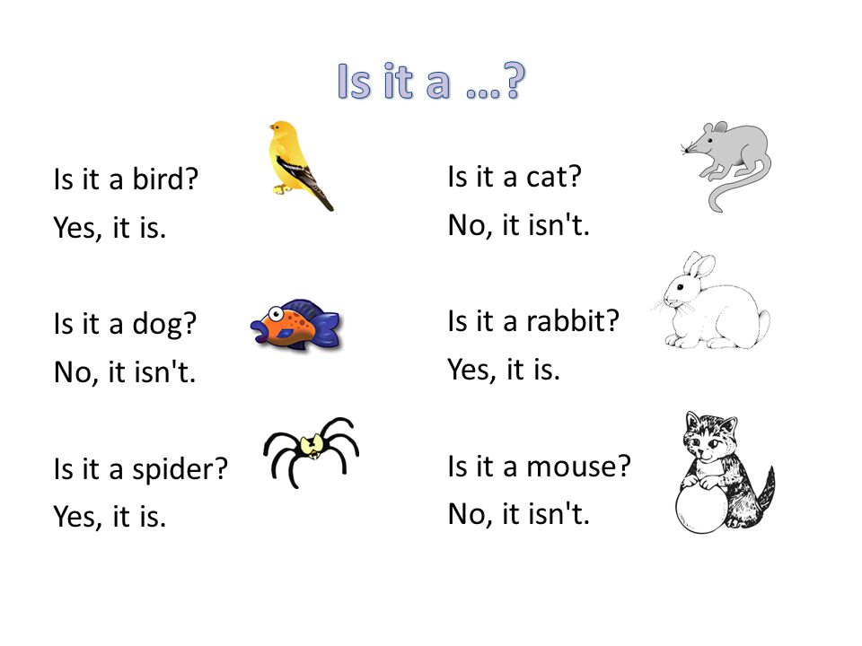 Is it a … Is it a bird Yes, it is. Is it a dog No, it isn t. Is it a spider