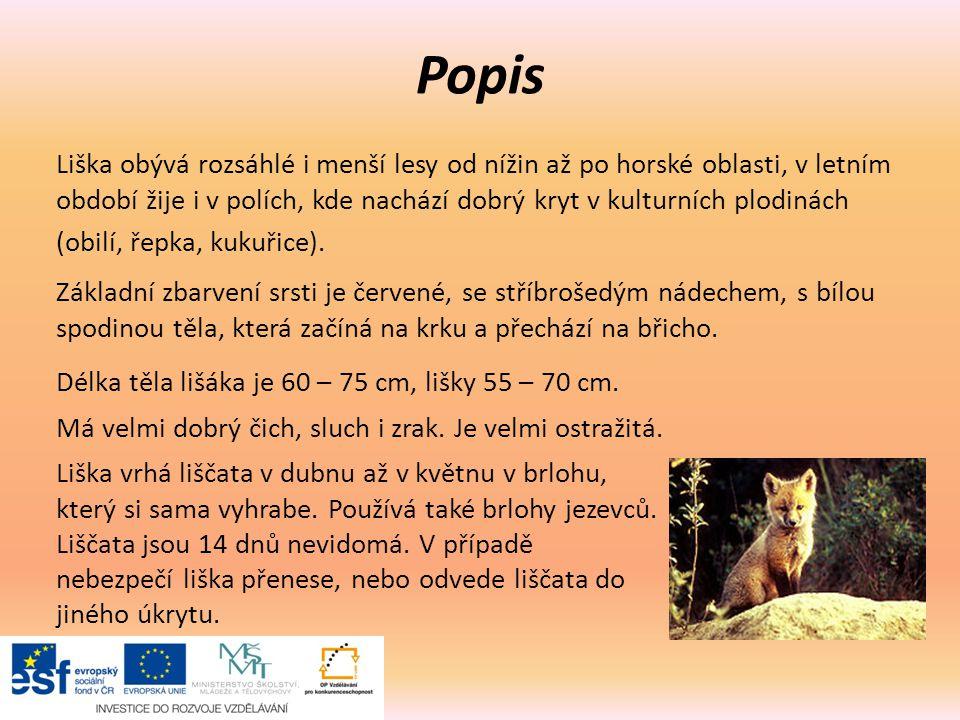 Pří 176 Rozmanitost přírody Liška obecná Autor  Mgr. Eliška Galíková ... 7fbc17737e