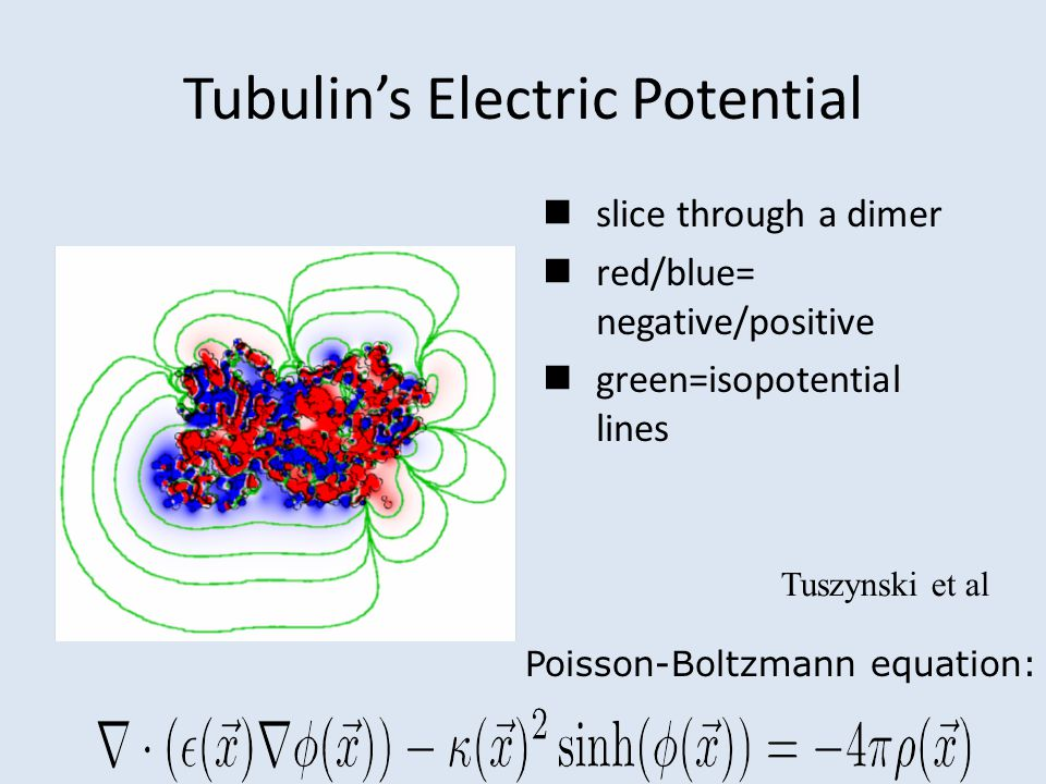 Tubulin's Electric Potential