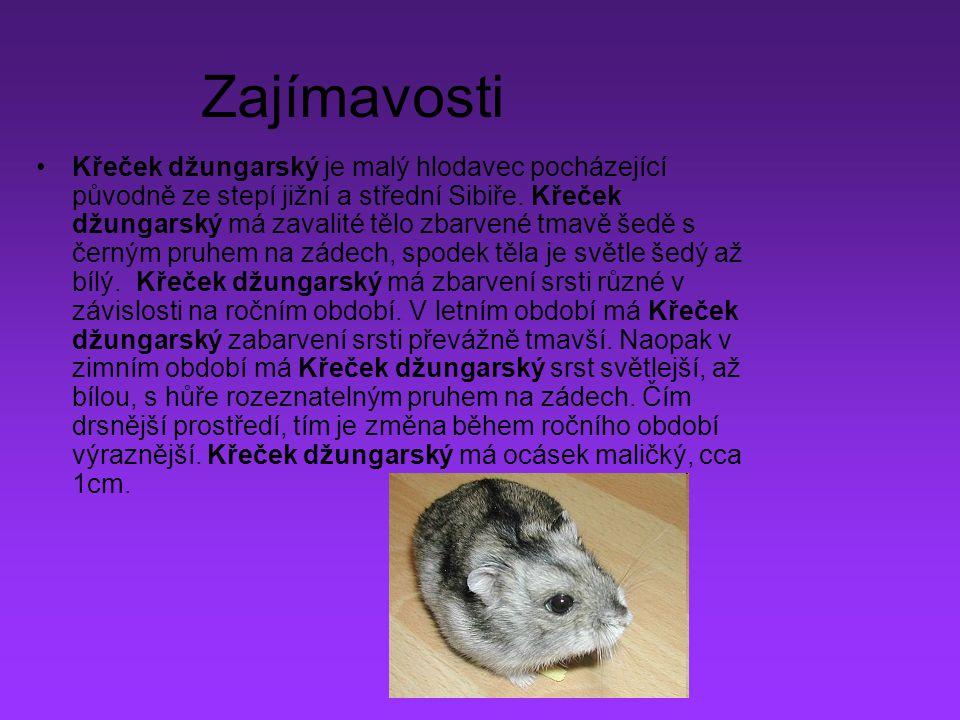 Krecek Dzungarsky Ppt Stahnout