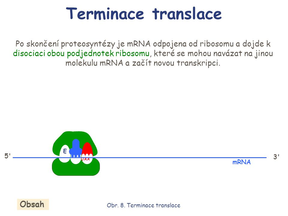 Obr. 8. Terminace translace