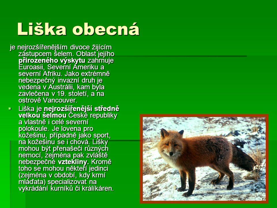 Liška obecná Vulpes vulpes - ppt stáhnout 43bb1f6095