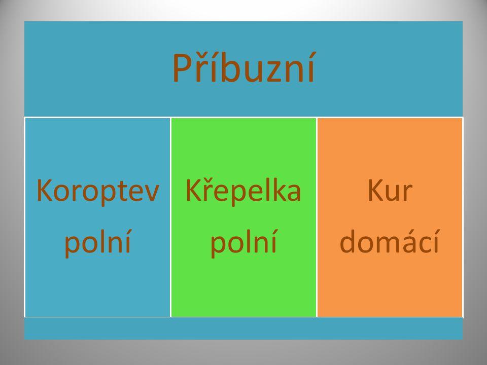 Vy 32 Inovace Pr 5 04 Bazant Obecny Prezentace Nazev Sablony Ppt