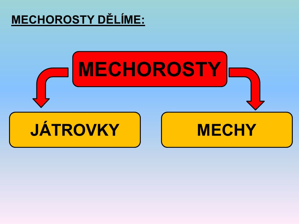 MECHOROSTY DĚLÍME: MECHOROSTY JÁTROVKY MECHY