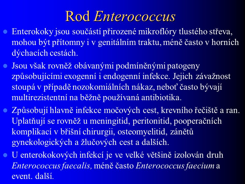 Rod Enterococcus