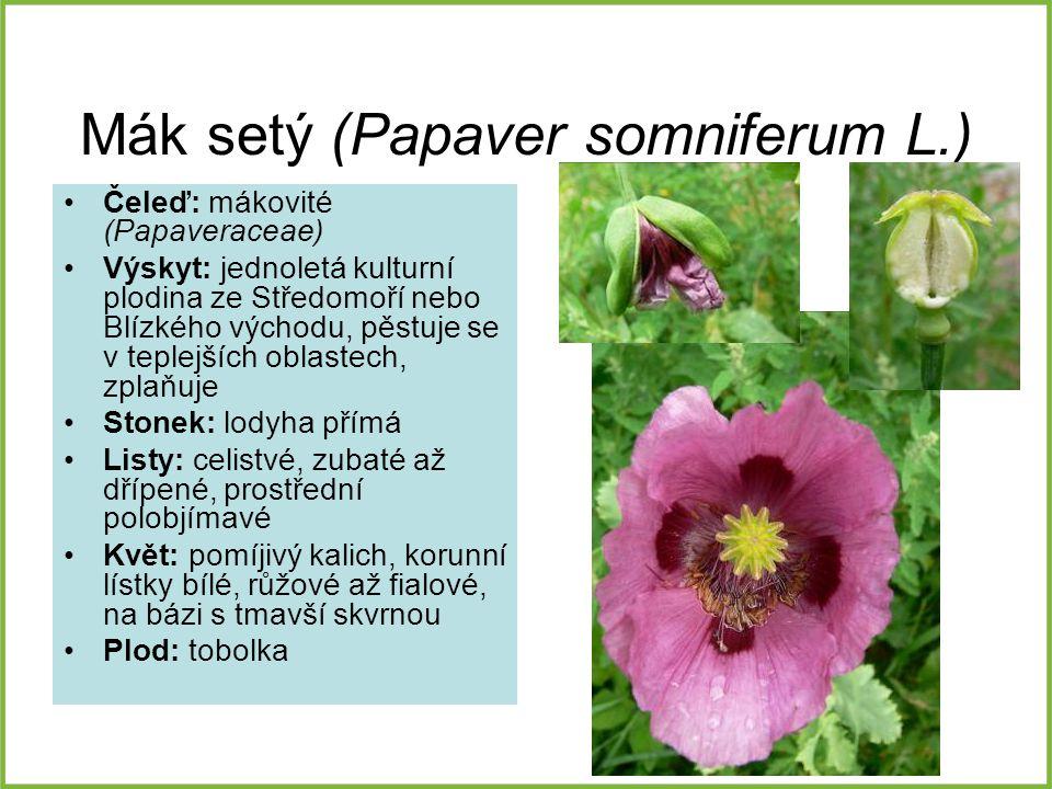 BOTASKA – botanika s kamerou CZ.1.07 2.2.00  - ppt stáhnout a6d8d020a7